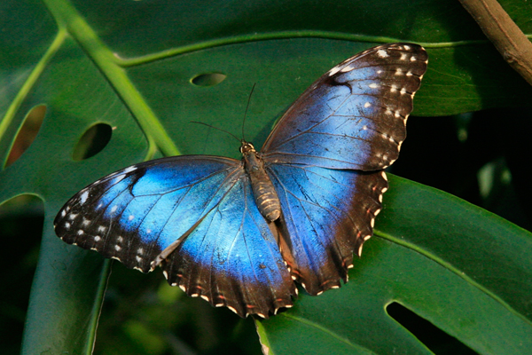 Butterfly Farm La Guácima Half Day Tour