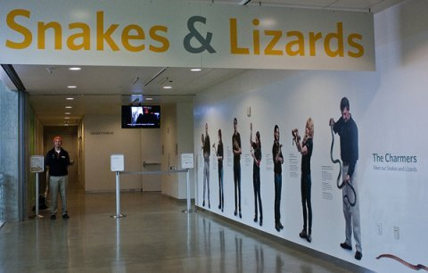 Welcome to Snakes & Lizards