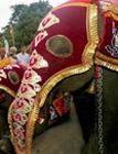 Thumbnail image for Full Moon Festival in Sri Lanka