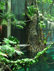 Thumbnail image for California Academy of Sciences: The Rainforest in my Back Yard