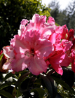 Thumbnail image for Mendocino County: Days of Wine and Rhodies, part 2
